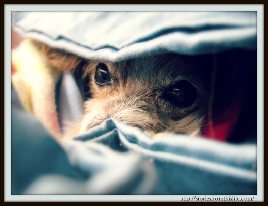 Anakin Snuggled in Multiple Blankets