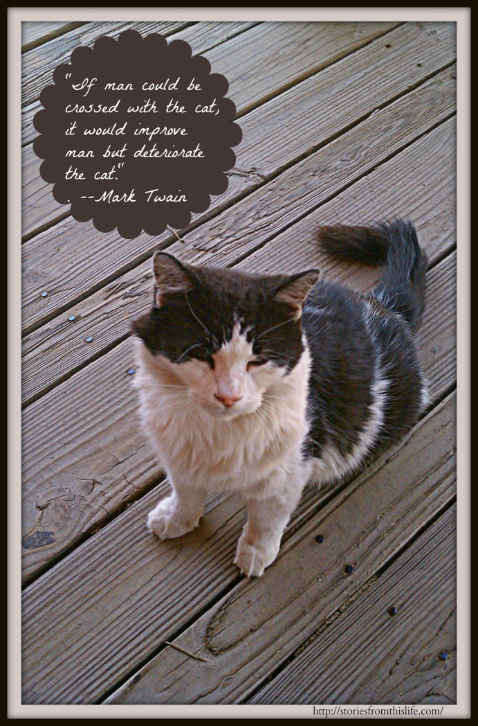 Mark Twain on the Ultimate Superiority of Cats