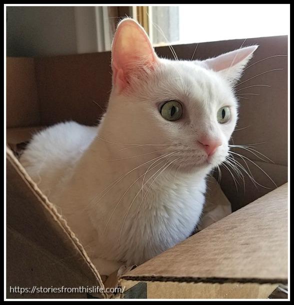 katniss-in-box