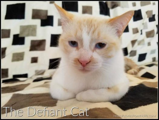defiant cat